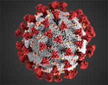 Coronavirus image from CDC media kit 217x170